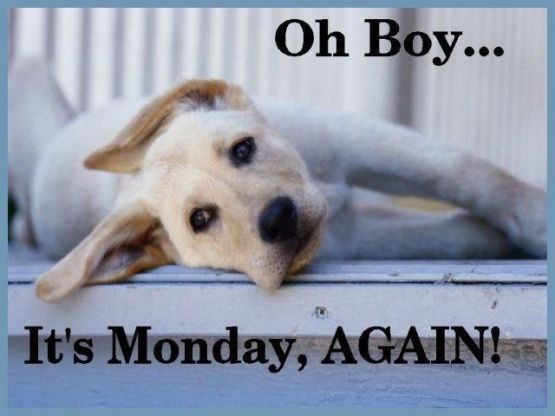 169401-Oh-Boy-Its-Monday-Again