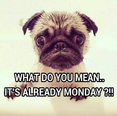I Can't Monday 9